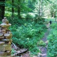 Odenwald – Siedelsbrunn Sommer Trail